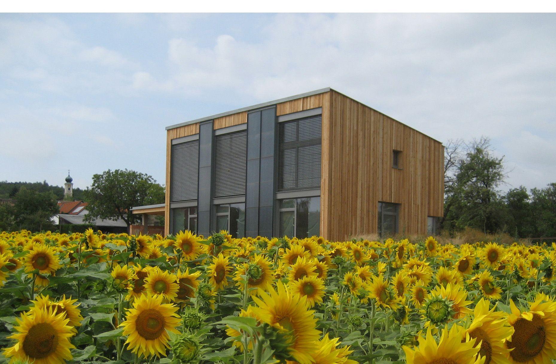 Sonnenblumen vor dem Einfamilien-Sonnenhaus Oberdürnbach von Architekt Martin Rührnschopf