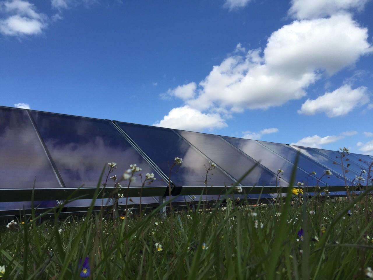 Solarkollektoren vor Blumenwiese